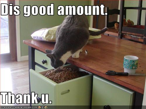 uh43048,1258539940,funny-pictures-cat-is-satisfied-with-food