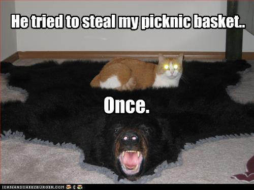 uh43048,1258539970,funny-pictures-cat-sleeps-on-bear-pelt