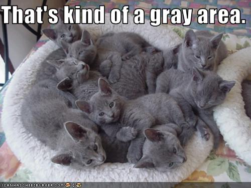 uh43048,1258539991,funny-pictures-kittens-are-grey