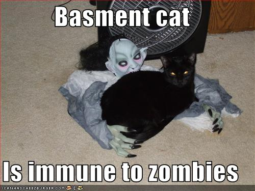 uh43048,1258540004,funny-pictures-basement-cat-is-immune-to-zombies
