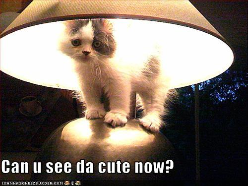 uh43048,1259253566,funny-pictures-cat-is-under-lamp