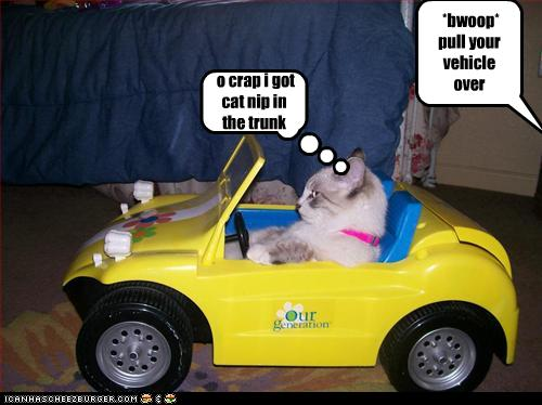 uh43048,1259698335,funny-pictures-cat-gets-pulled-over