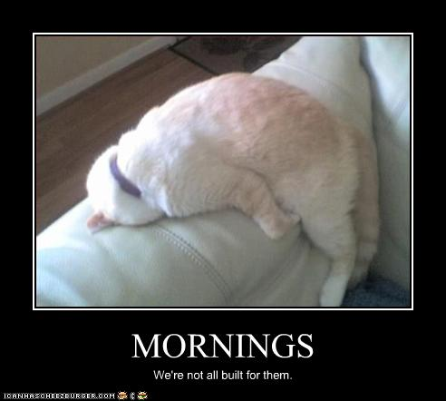 uh43048,1259698335,funny-pictures-cat-hates-mornings