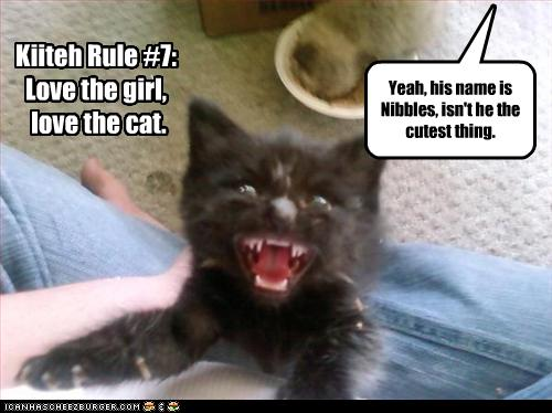 uh43048,1259698335,funny-pictures-kitten-is-named-nibbles