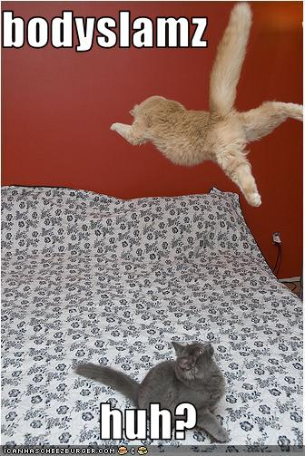 uh43048,1259698335,funny-pictures-one-cat-wrestles