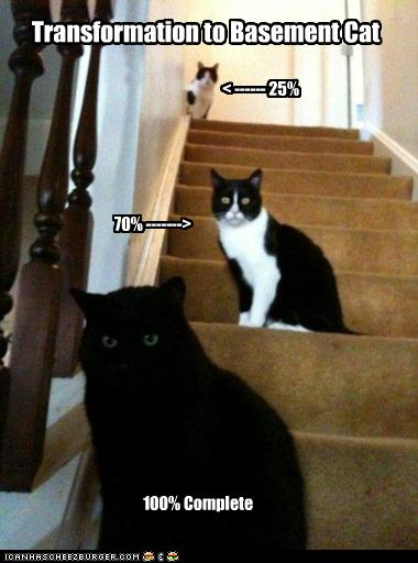 uh43048,1259698335,funny-pictures-transformation-to-basement-cat