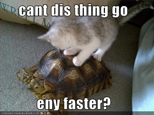 uh43048,1259698562,funny-pictures-kitten-rides-turtle