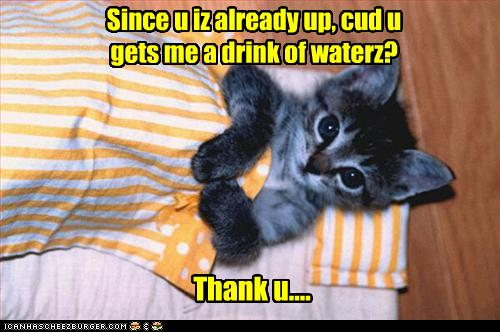 uh43048,1259698649,funny-pictures-kitten-asks-for-water