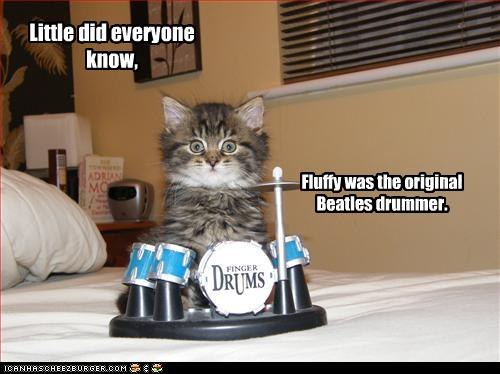 uh43048,1259698669,funny-pictures-kitten-has-drum-set