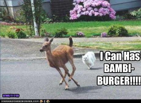 uh43048,1260012419,funny-pictures-cat-wants-deer-burger