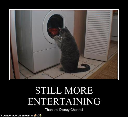 uh43048,1260012466,funny-pictures-cat-watches-your-laundry-spin