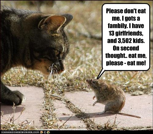 uh43048,1260127619,funny-pictures-rat-asks-to-be-eaten