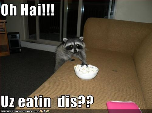 uh43048,1260127635,funny-pictures-raccoon-wants-to-eat-your-food
