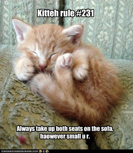 uh43048,1260381808,funny-pictures-kitten-takes-up-sofa