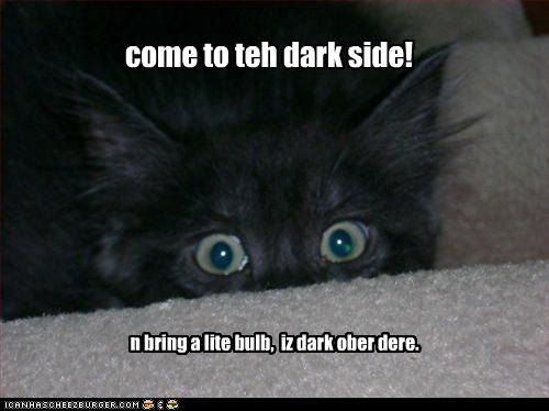 uh43048,1260381824,funny-pictures-kitten-comes-to-dark-side