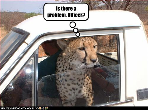 uh43048,1260381892,funny-pictures-leopard-gets-pulled-over