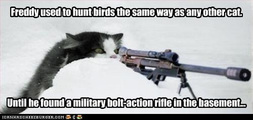 uh43048,1261489216,funny-pictures-cat-hunts-birds