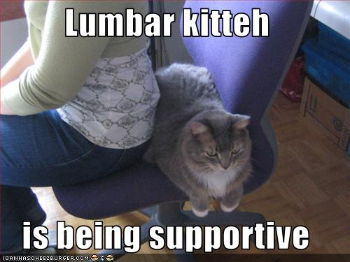 uh43048,1261489257,funny-pictures-cat-is-supportive