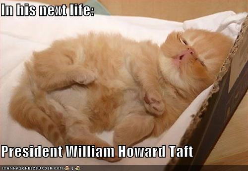 uh43048,1261489311,funny-pictures-kitten-looks-like-president