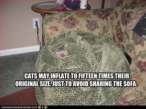 uh43048,1261489348,funny-pictures-cat-has-inflated