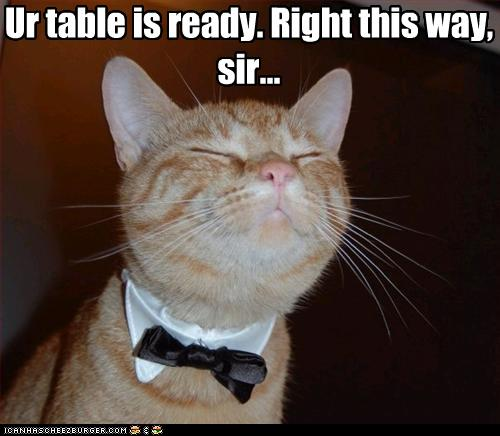uh43048,1261489470,funny-pictures-cat-is-a-waiter