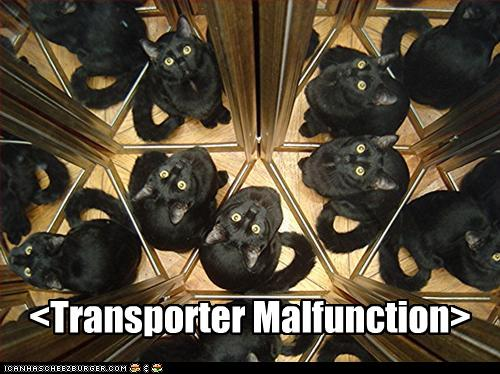 uh43048,1261489482,funny-pictures-cat-is-in-a-transporter