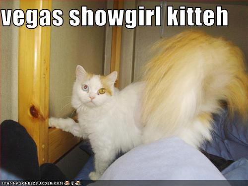 uh43048,1261582440,funny-pictures-cat-is-a-showgirl
