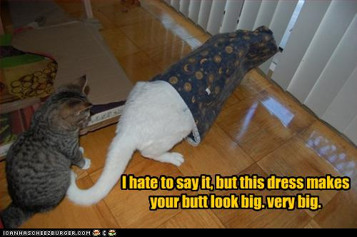 uh43048,1262380853,funny-pictures-cat-is-in-bad-dress