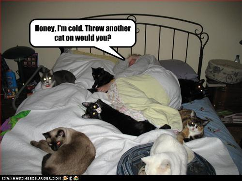 uh43048,1262380875,funny-pictures-many-cats-are-on-bed