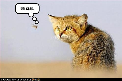 uh43048,1262380896,funny-pictures-wild-cat-sees-bug