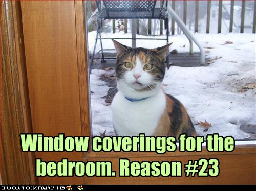 uh43048,1262380921,funny-pictures-cat-wants-curtains-for-your-room