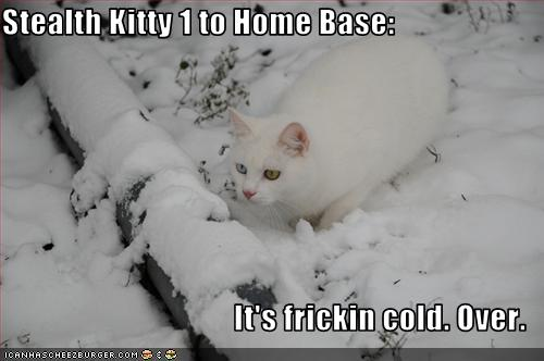uh43048,1262381004,funny-pictures-cat-is-in-snow