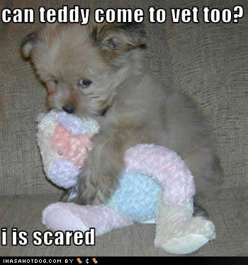 uh43048,1262623242,cute-puppy-pictures-vet-scared1