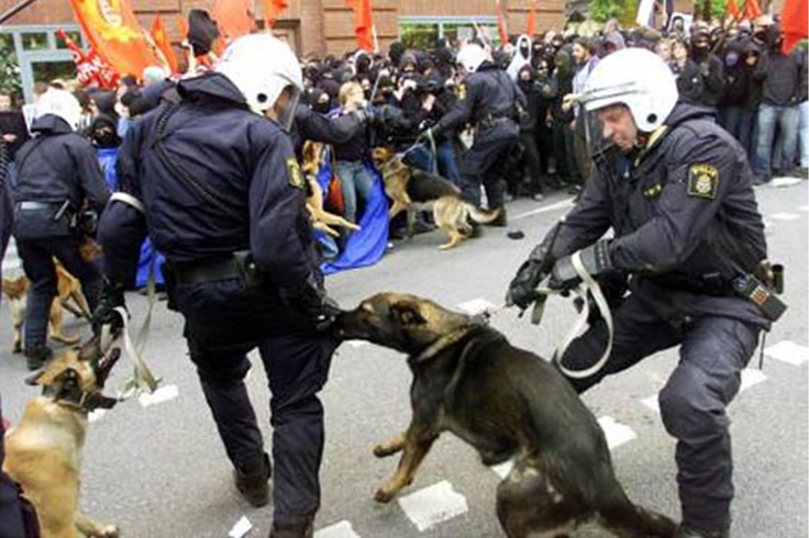 Police dog escapes from handler & mauls four people