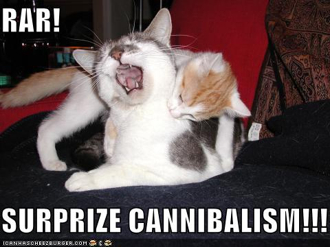 uh43048,1264082653,lolcats-funny-pictures-surprise-cannibalism