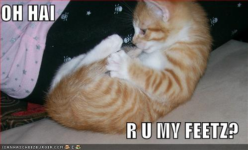 uh43048,1264082789,lolcats-funny-picture-my-feet