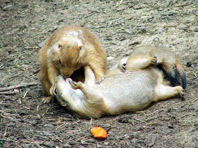 uh43048,1264952366,funny-picture-photo-nature-squirrel-kiss-creativity-pic