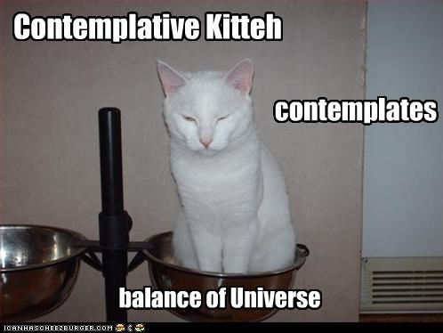 uh43048,1265221328,funny-pictures-cat-ponders-balance