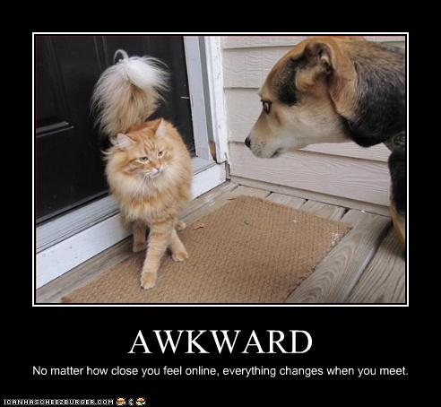 uh43048,1265221357,funny-pictures-cat-and-dog-have-awkward-meeting