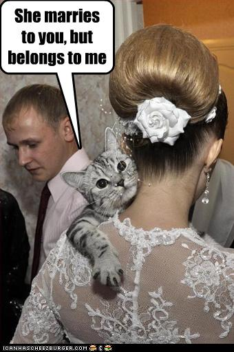 uh43048,1265221382,funny-pictures-cat-owns-bride