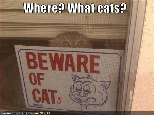 uh43048,1265221463,funny-pictures-cat-sees-beware-of-cats-sign