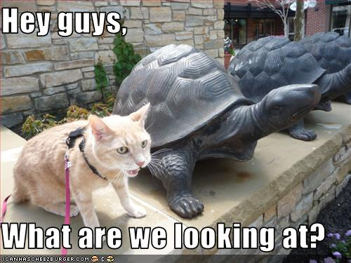 uh43048,1265221490,funny-pictures-cat-asks-what-turtles-look-at