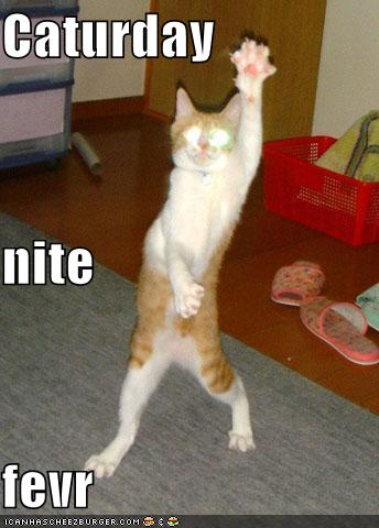 uh43048,1266951994,funny-pictures-caturday-night-fever-dancing-cat