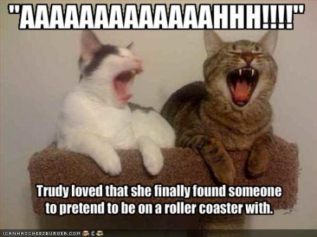 uh43048,1267986010,funny-pictures-cats-pretend-that-they-are-on-a-roller-coaster-450x337