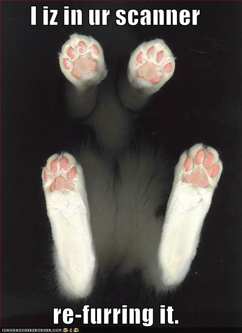 uh43048,1268215202,funny-pictures-cat-adds-fur-to-your-scanner
