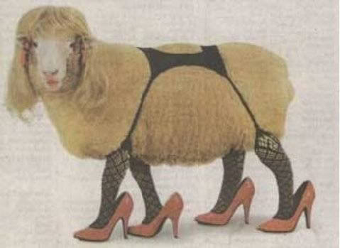uh43048,1268224905,sexy sheep