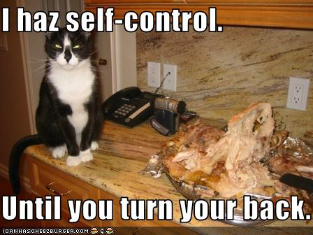 uh43048,1268297040,funny-pictures-cat-has-self-control-sort-of