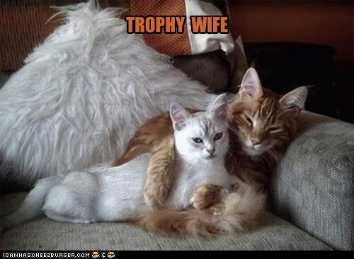 uh43048,1268297117,funny-pictures-cat-has-trophy-wife