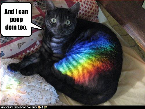 uh43048,1268297199,funny-pictures-cat-can-poop-rainbows