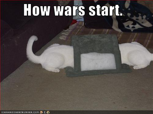 uh43048,1268297275,funny-pictures-cats-have-war